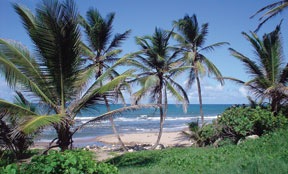 Photograph: East Coast in Barbados, where Washburn Law hosts a summer study abroad program.